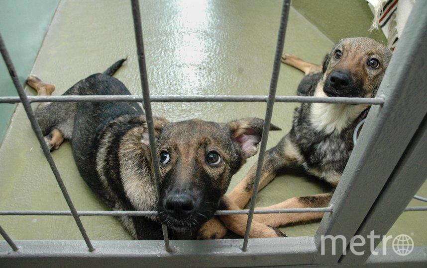 """Приюты для бездомных животных в Северной столице переполнены. Фото Святослав Акимов, """"Metro"""""""