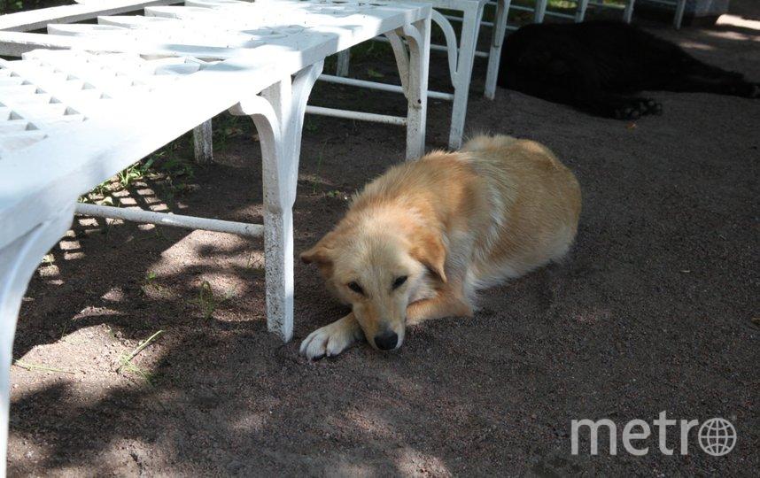 """Чаще всего второй дом обретают маленькие и породистые собаки. Фото Святослав Акимов, """"Metro"""""""