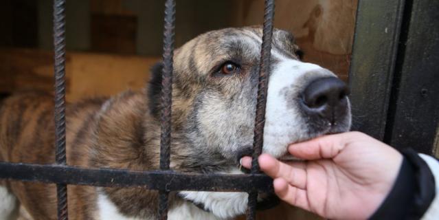 Законопроект за выброс животных подразумевает штрафы до 30 тысяч рублей.