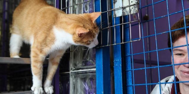 Штрафы, чипирование и регистрация животных помогут решить проблему с безнадзорными собаками и кошками.