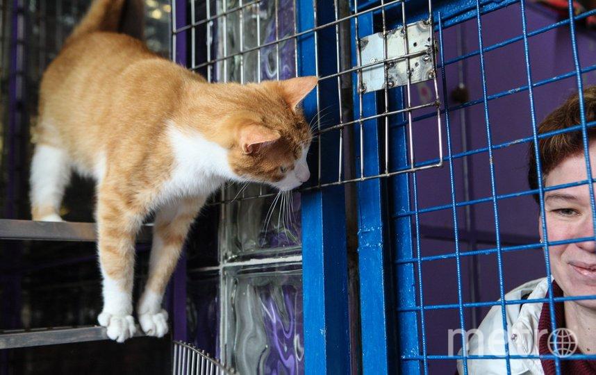 """Штрафы, чипирование и регистрация животных помогут решить проблему с безнадзорными собаками и кошками. Фото Святослав Акимов, """"Metro"""""""