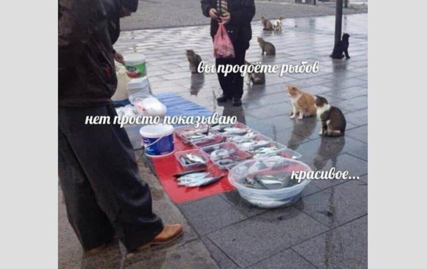 """Новый мем. Фото Сообщество """"Мемы про котов""""."""