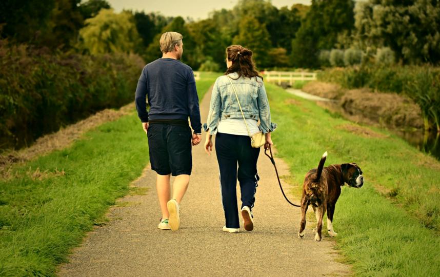 Пешие прогулки – отличное средство профилактики варикоза. Фото pixabay