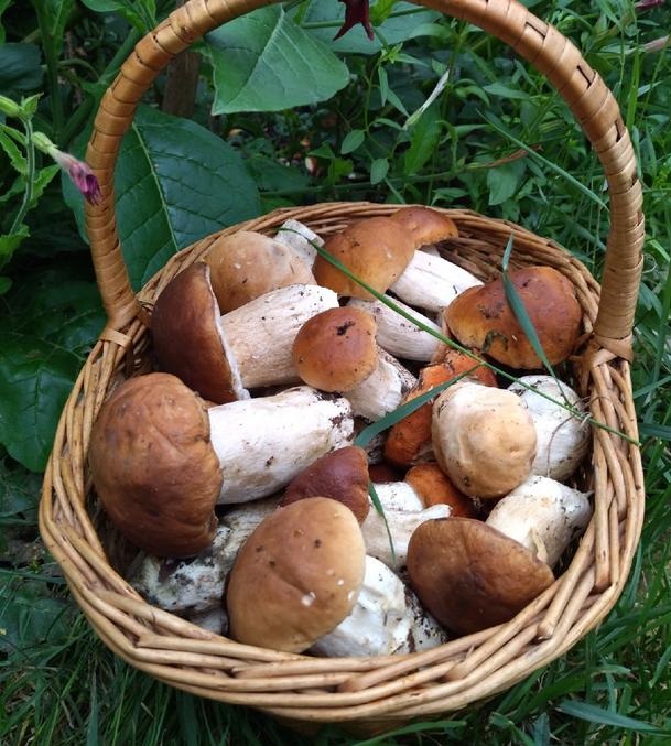 Основной «грибной» сезон начнется в Ленобласти после 20 августа. Фото vk.com/grib_spb.