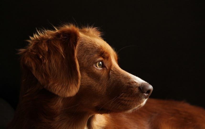 Пес мог умереть. Фото Pixabay.