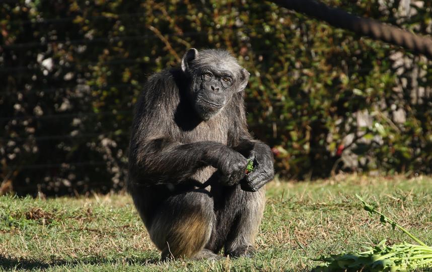 У Джуди осталась дочь Валентина и внучка Джудит. Фото Пресс-служба зоопарка.