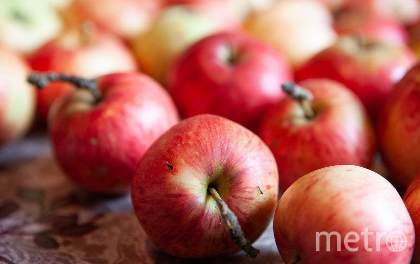 """Помимо шарлотки и штруделя яблочный урожай можно """"пустить"""" на салаты, горячие блюда и хреновину. Фото Святослав Акимов, """"Metro"""""""