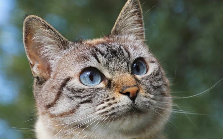 Ранее на кота подали жалобу. Фото Pixabay.