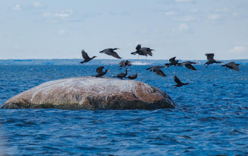 """Рифы в Балтийском море. На таких камнях отдыхают бакланы. Бывалые моряки рассказывают, что здесь можно встретить даже тюленей. Фото Алена Бобрович, """"Metro"""""""