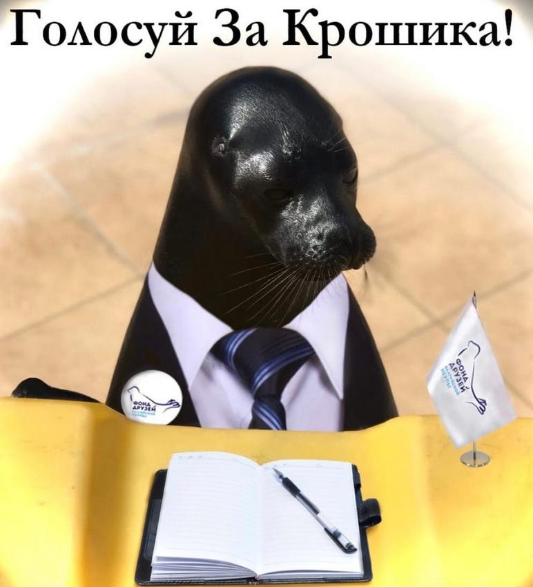 Сотрудники Фонда друзей балтийской нерпы ищут название для «общественного объединения» главного тюленя Петербурга. Фото vk.com/sealrescue.