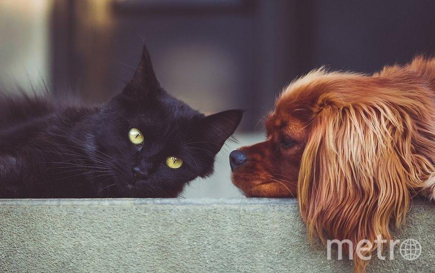 Фартинг требует вывести из столицы Афганистана всех его сотрудников и питомцев – 140 собак и 60 кошек. Фото pixabay.