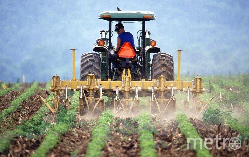 """В Самаре откроют """"Школу фермера"""". Фото Pixabay"""