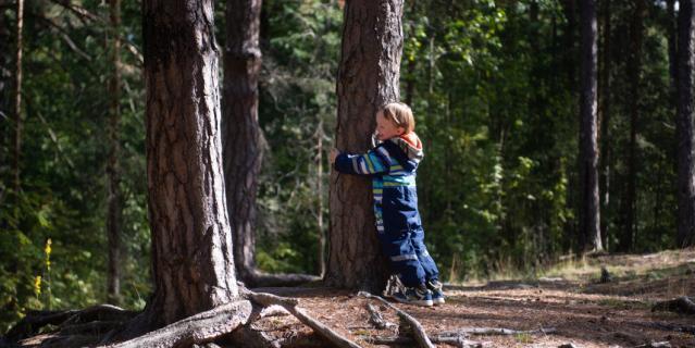 Шестилетний Тимофей, следуя по лесу, обнимает почти каждое дерево.