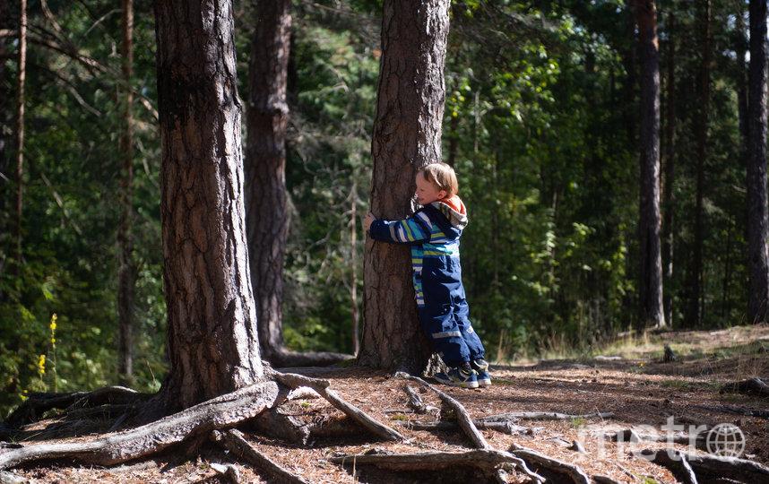 """Шестилетний Тимофей, следуя по лесу, обнимает почти каждое дерево. Фото Святослав Акимов, """"Metro"""""""
