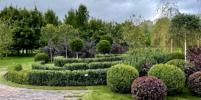 Русский сад: латынь и скаты