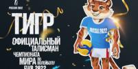 Тигр станет официальным талисманом ЧМ по волейболу в России
