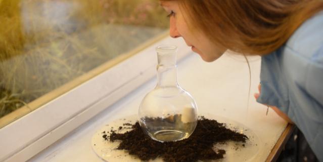 Запах земли сладковатый и немного напоминает эфирное масло.