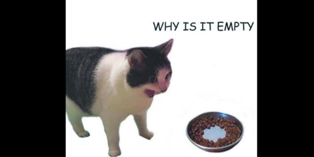Оригинал мема. Котик спрашивает у миски, почему она пустая.