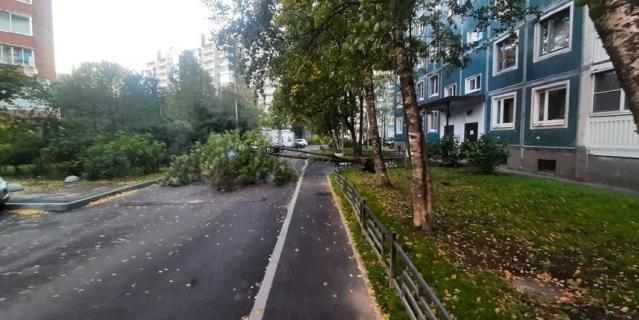 Дерево упало на Северном проспекте.