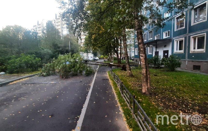 Дерево упало на Северном проспекте. Фото https://vk.com/spb_today