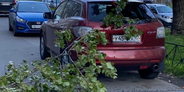 Дерево упало на Шелгунова.
