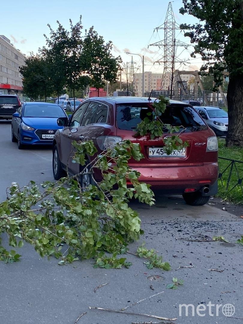 Дерево упало на Шелгунова. Фото https://vk.com/spb_today