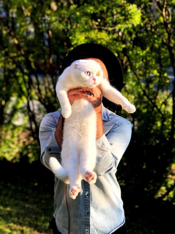 Евгений назвал кота в честь Иосифа Бродского. По паспорту же его зовут Золтон (Zolton Ingerman). Фото предоставлены Евгением Петровым