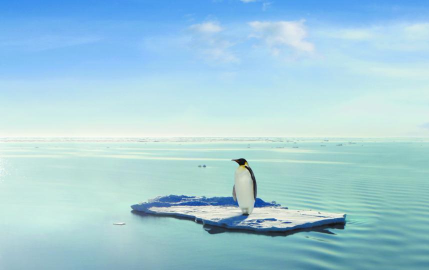 Императорских пингвинов неспроста называют королями среди этих птиц – они имеют самый большой вес и самое плотное оперение. Фото Getty