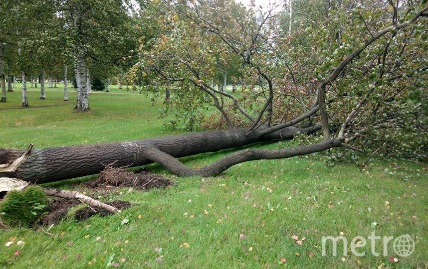 Ранее сообщалось о 30 упавших деревьях. Фото gov.spb.ru.