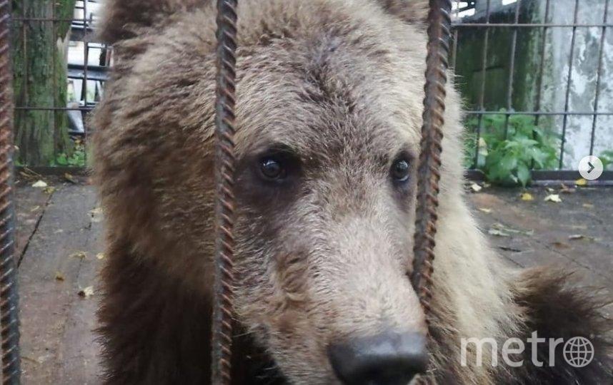 """Это 21 по счету медведь в центре """"Велес"""". Фото instagram.com/veles_center_spb."""