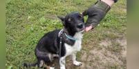 Собаку Еву, потерявшуюся в Домодедово, нашли