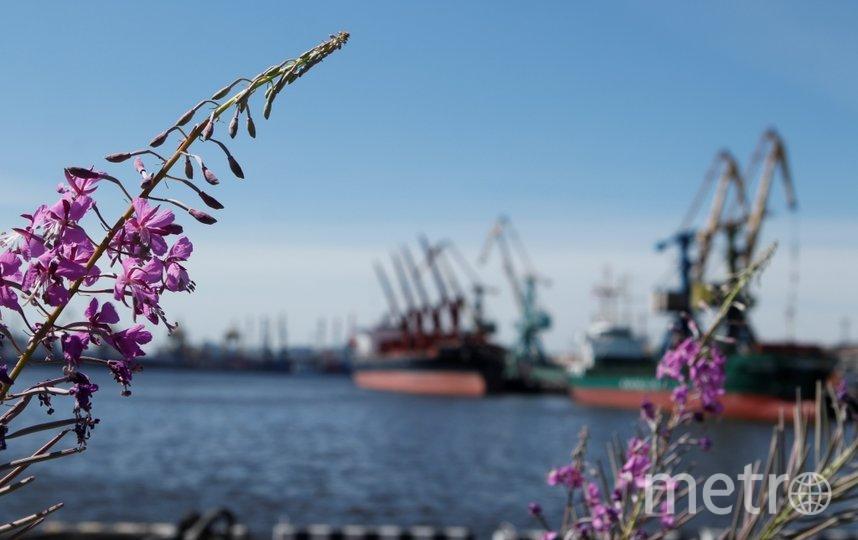 Фото предоставлено пресс-службой АО «Морской порт Санкт-Петербург».