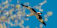 Пернатые открыли сезон: какие птицы мигрируют на юг, а какие зимуют в Петербурге