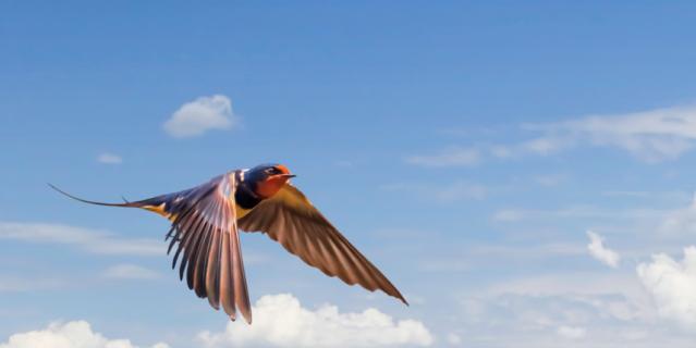 Стрижи, как и все насекомоядные птицы начинают улетать на юг с середины августа.