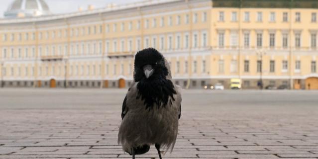С появлением мегаполисов многие птицы отказались от миграции.
