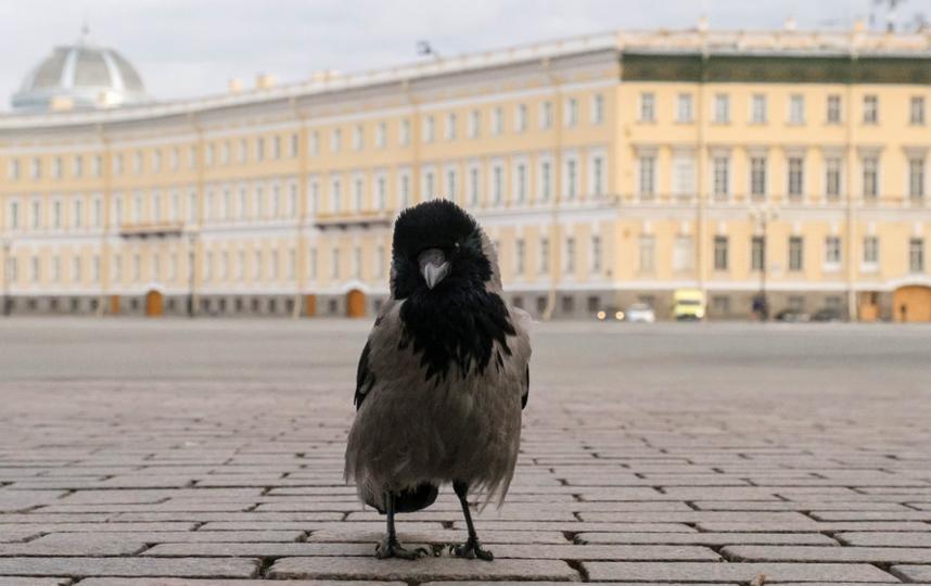 """С появлением мегаполисов многие птицы отказались от миграции. Фото Алена Бобрович, """"Metro"""""""