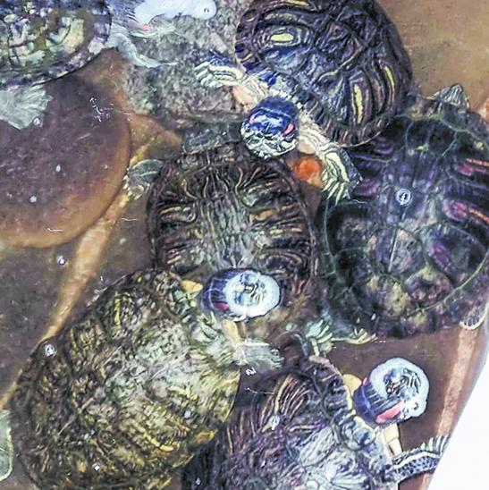 Снимок, с которого началось спасение черепах. Фото T.ME/MOSNOW