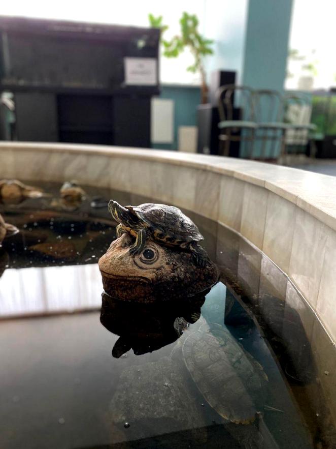Судьбу черепах  решали всем Интернетом