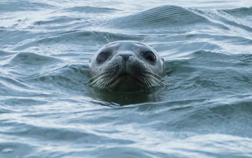 "Тюлень релаксирует на озере Буссе. Фото Алена Бобрович, ""Metro"""