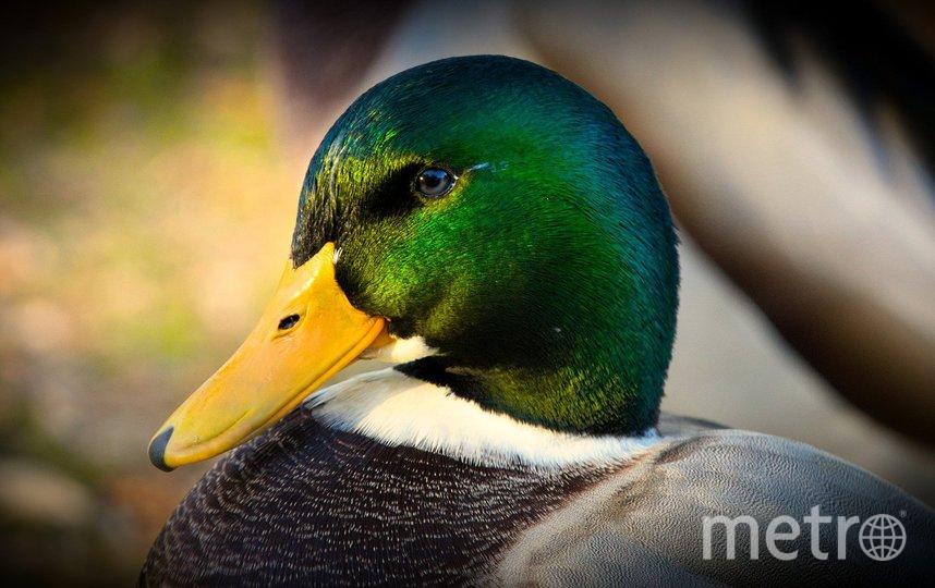 Летом на природных территориях в 223 выводках появилось 1 тыс. 189 птенцов. Фото pixabay.com