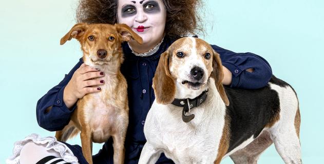 15 собак и 11 клоунов приняли участие в фотосессии.