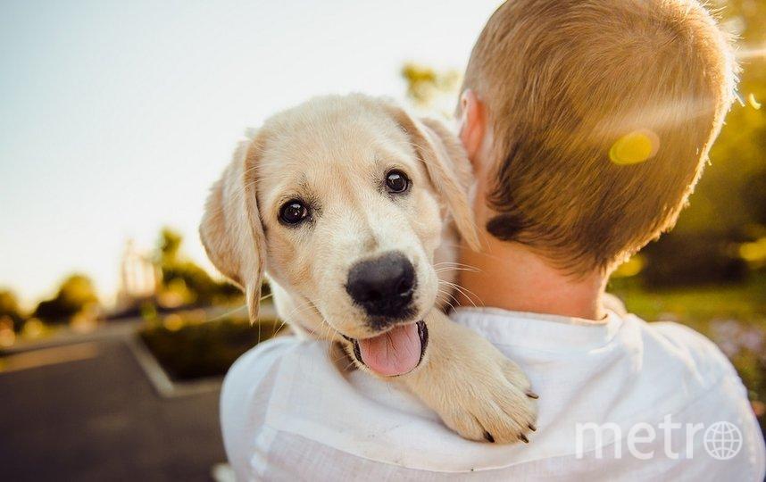В Саратове может появиться лимит на собак. Фото pixabay.