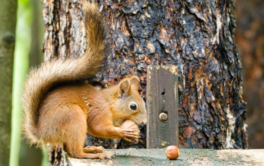 "Одной белке необходимо 14,5 килограмм орехов в год. Фото Алена Бобрович, ""Metro"""