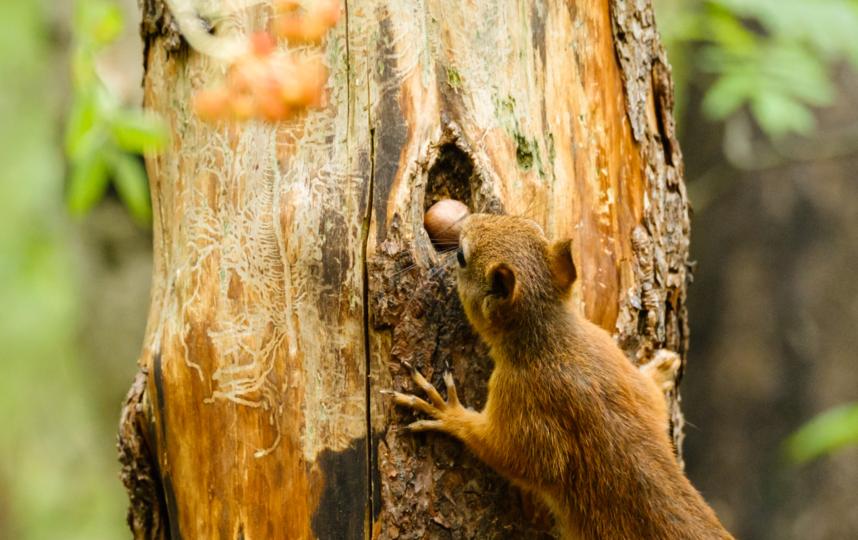 """Белкам нельзя давать орехи, чипсы и шоколад. Фото Алена Бобрович, """"Metro"""""""