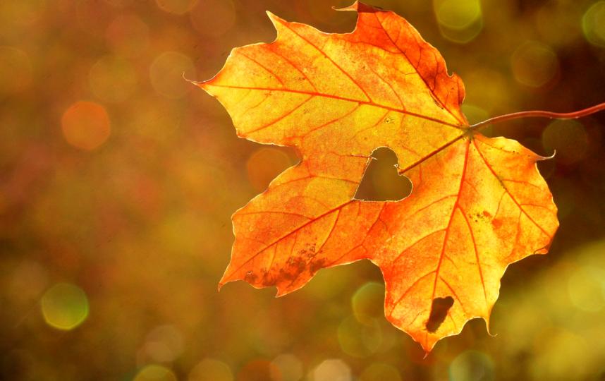 Просто послушать, как шуршат листья под ногами, полезно для здоровья, говорят врачи. Так нормализуется уровень гормона стресса. Фото pixabay