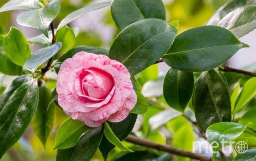 С 4 октября кассы Ботанического сада буду работать ежедневно с 10:00 до 16:30. Фото  Ботанический сад.