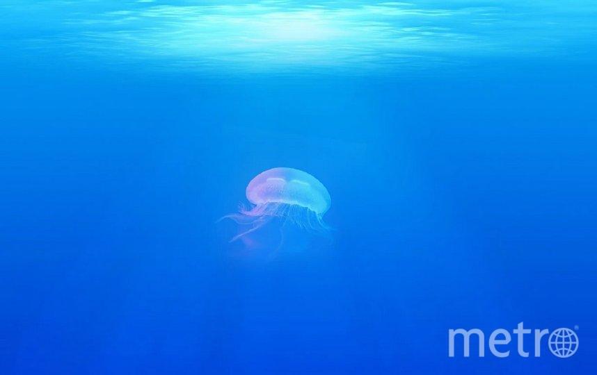 В Средиземном море плавает более 3500 тонн пластика. Фото pixabay.