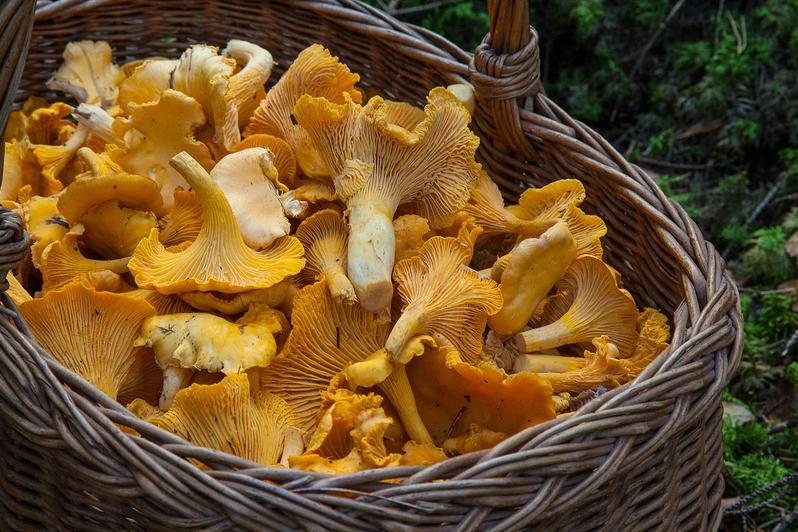 Миколог рассказал, какие грибы сейчас растут в лесу. Фото pixabay