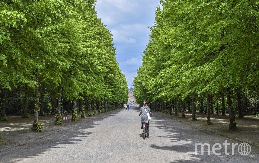 На велопрогулку теперь можно отправиться по одному из туристических маршрутов. Фото Pixabay