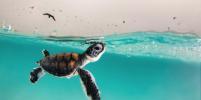 Лучшие фотографии океана 2021 года: кто стал победителем конкурса Ocean Photography Awards